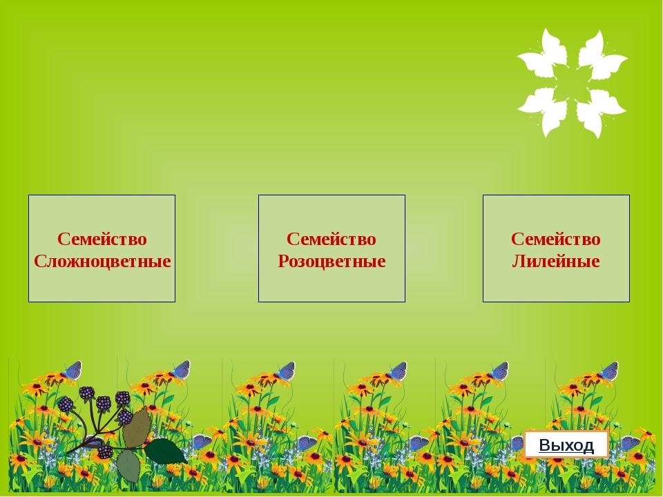Использованные ресурсы Полевые цветы с бабочками Цветы яблони Одуванчик Шипов...