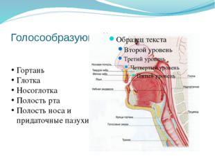 Голосообразующий аппарат Гортань Глотка Носоглотка Полость рта Полость носа и