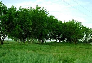 А здесь когда-то стояла усадьба Крашенинникова
