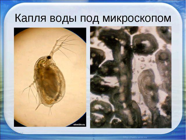 Капля воды под микроскопом * *