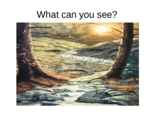 What can you see?