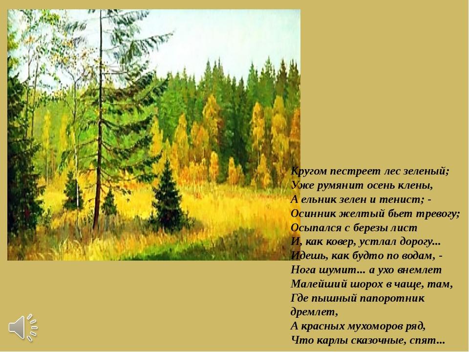 Кругом пестреет лес зеленый; Уже румянит осень клены, А ельник зелен и тенист...