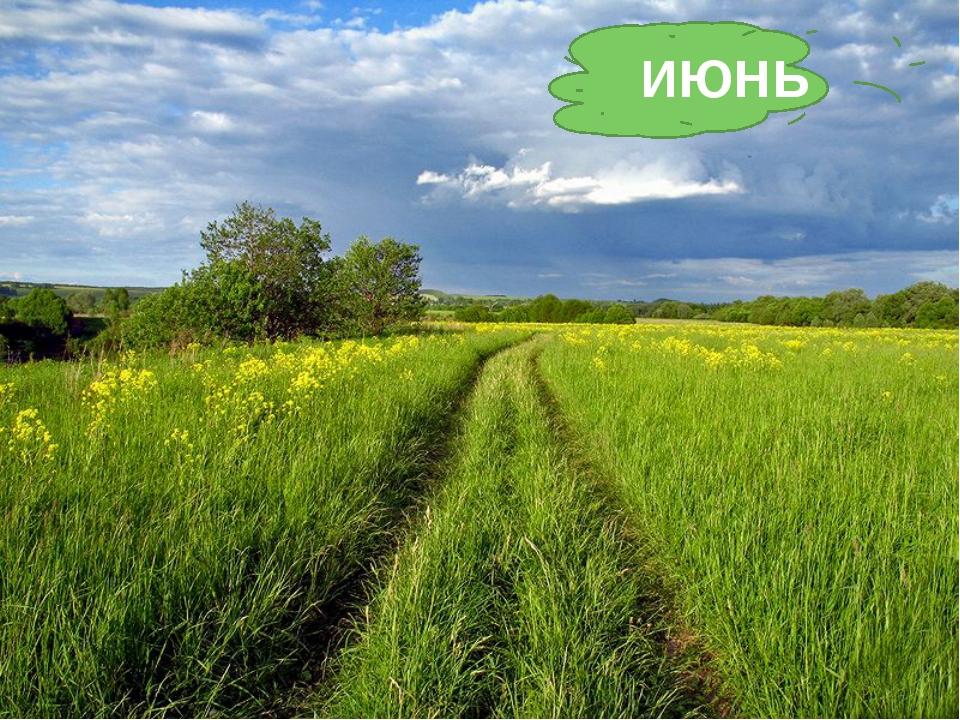 Тёплый, длинный-длинный день. В полдень – крохотная тень. Зацветает в поле ко...