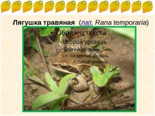 Лягушка травяная (лат.Rana temporaria) FokinaLida.75@mail.ru