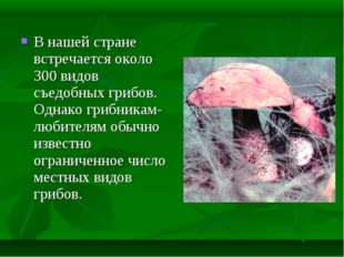 В нашей стране встречается около 300 видов съедобных грибов. Однако грибникам