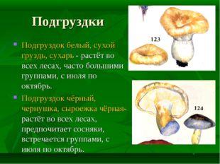 Подгруздки Подгруздок белый, сухой груздь, сухарь - растёт во всех лесах, час