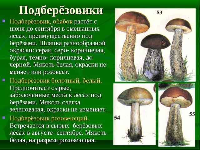 Подберёзовики Подберёзовик, обабок растёт с июня до сентября в смешанных леса...
