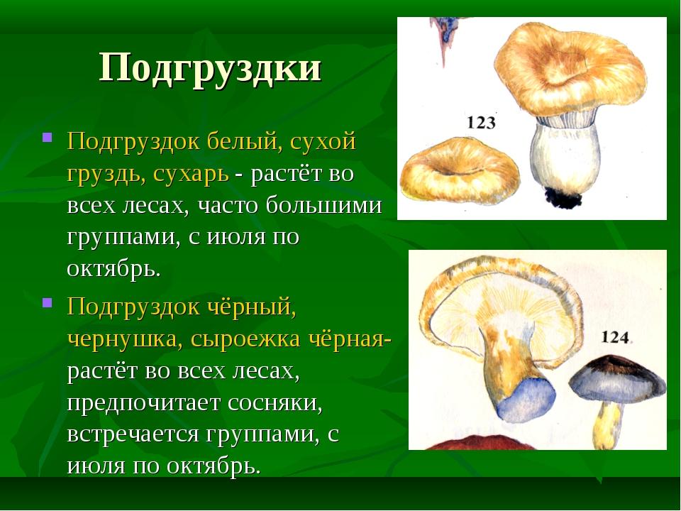 Подгруздки Подгруздок белый, сухой груздь, сухарь - растёт во всех лесах, час...