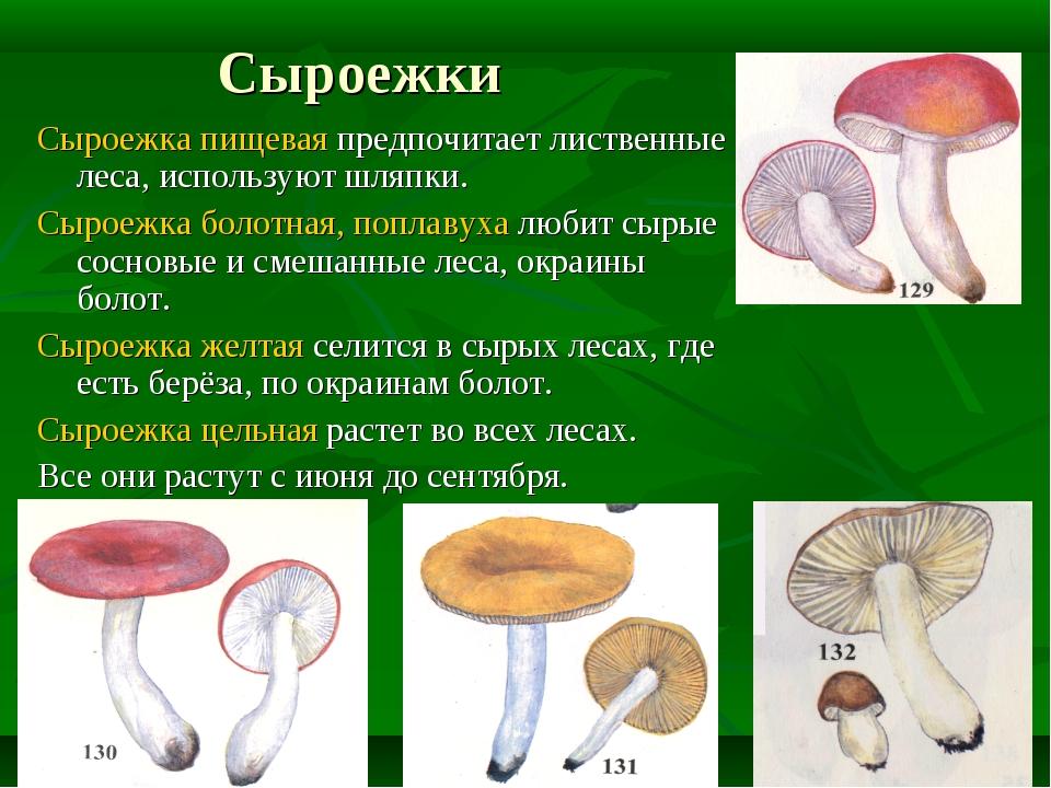 Сыроежки Сыроежка пищевая предпочитает лиственные леса, используют шляпки. Сы...