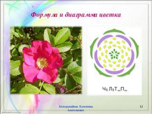 Формула и диаграмма цветка Бескоровайная Валентина Анатольевна * Бескоровайна