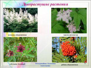 Дикорастущие растения * Бескоровайная Валентина Анатольевна волжанка обыкнове