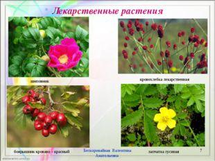 Лекарственные растения * Бескоровайная Валентина Анатольевна лапчатка гусиная