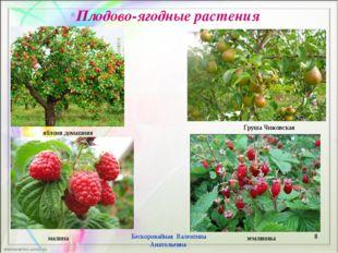 Плодово-ягодные растения * Бескоровайная Валентина Анатольевна яблоня домашня