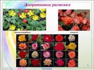 Декоративные растения * Бескоровайная Валентина Анатольевна Дюшенея индийская