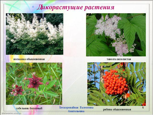 Дикорастущие растения * Бескоровайная Валентина Анатольевна волжанка обыкнове...