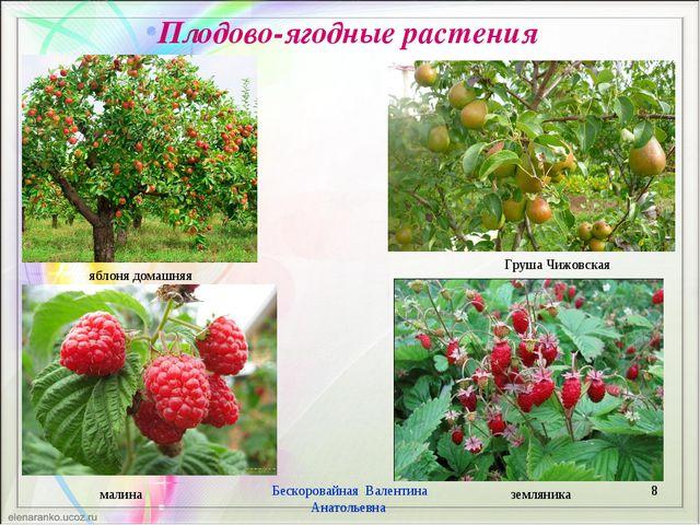 Плодово-ягодные растения * Бескоровайная Валентина Анатольевна яблоня домашня...
