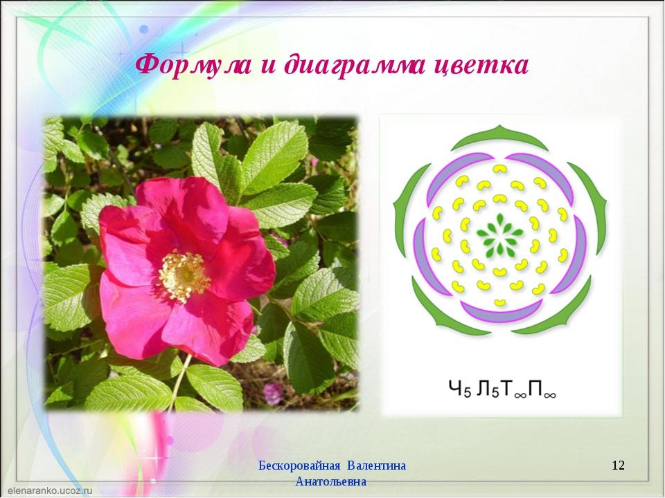 Формула и диаграмма цветка Бескоровайная Валентина Анатольевна * Бескоровайна...