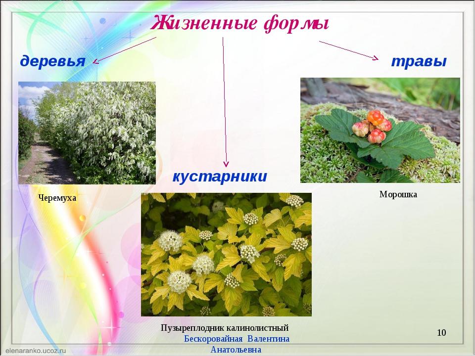 Жизненные формы * Бескоровайная Валентина Анатольевна деревья кустарники трав...