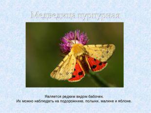 Является редким видом бабочек. Их можно наблюдать на подорожнике, полыни, мал