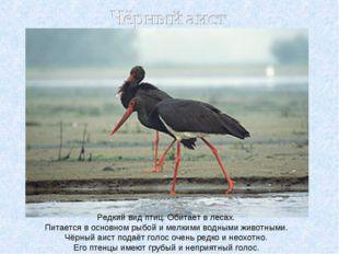 Редкий вид птиц. Обитает в лесах. Питается в основном рыбой и мелкими водными