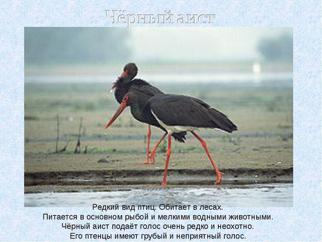 Редкий вид птиц. Обитает в лесах. Питается в основном рыбой и мелкими водными...