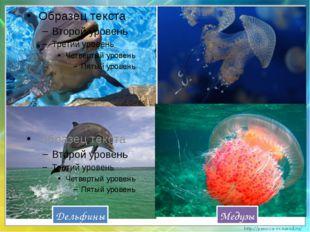 Дельфины Медузы