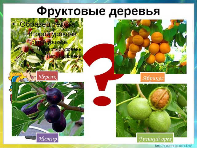 Фруктовые деревья Абрикос Персик Грецкий орех Инжир