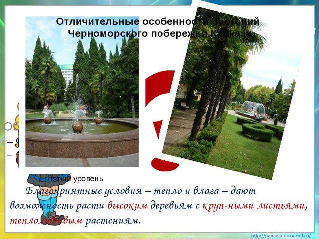 Отличительные особенности растений Черноморского побережья Кавказа Благоприя...