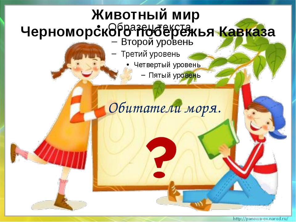 Обитатели моря. Животный мир Черноморского побережья Кавказа