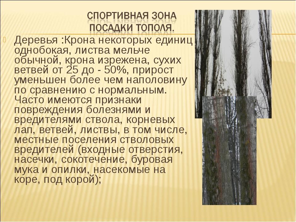 Деревья :Крона некоторых единиц однобокая, листва мельче обычной, крона изреж...