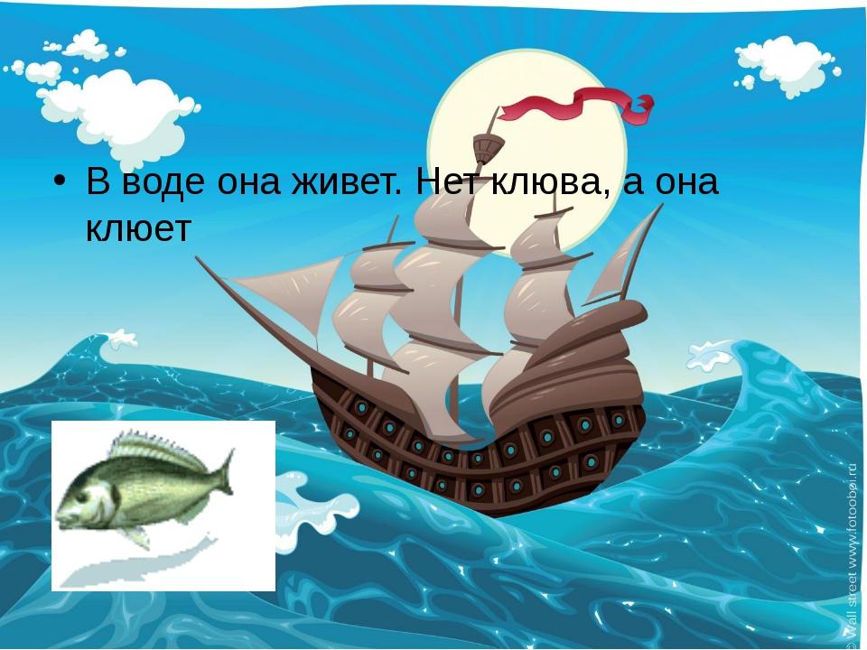 В воде она живет. Нет клюва, а она клюет