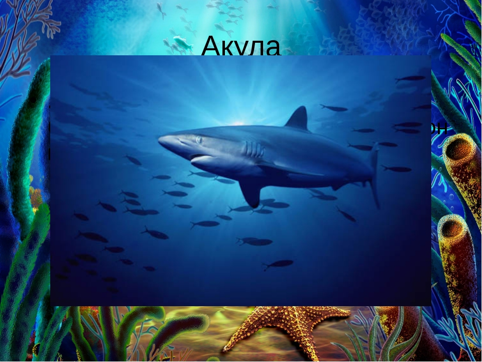 Акула . Зубы в пасти в три ряда. Это целая беда. Хищник этот знаменит тем, чт...