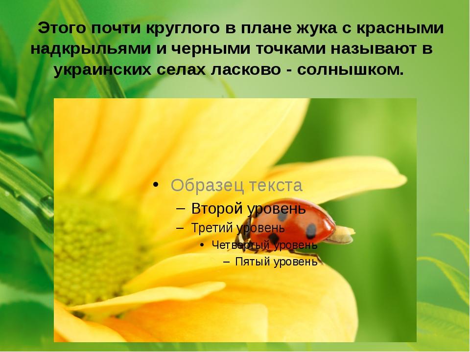 Этого почти круглого в плане жука с красными надкрыльями и черными точками н...