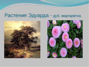 Растения Эдуарда - дуб, маргаритка.