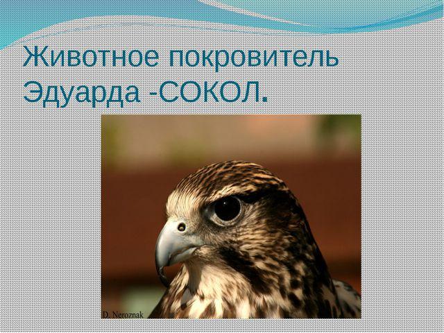 Животное покровитель Эдуарда -СОКОЛ.