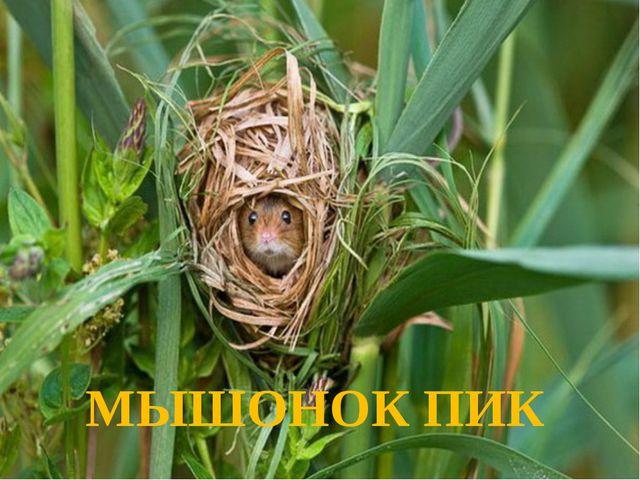 МЫШОНОК ПИК