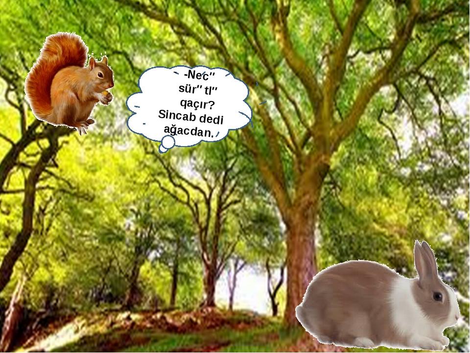 -Necə sürətlə qaçır? Sincab dedi ağacdan.