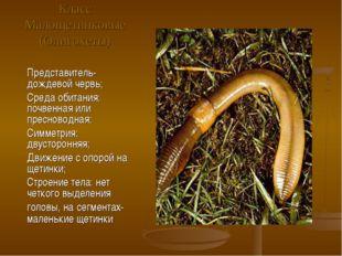 Класс Малощетинковые (Олигохеты) Представитель- дождевой червь; Среда обитани