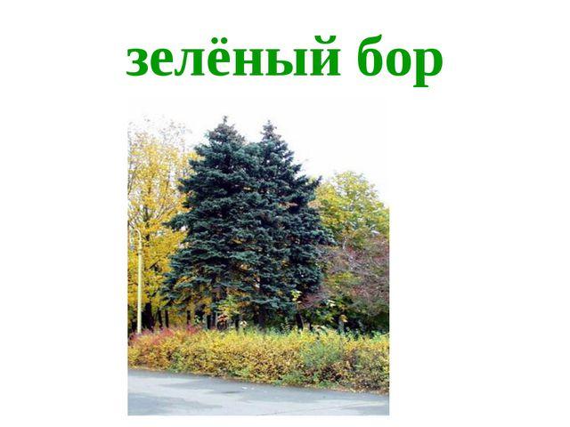 зелёный бор