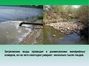 Загрязнение воды приводит к размножению малярийных комаров, из-за чего ежегод
