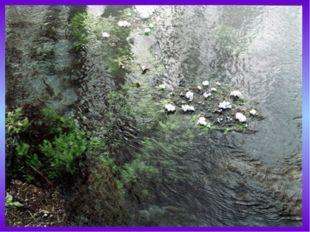 Уникален органический мир Байкала. В озере встречается около1500 видов живот