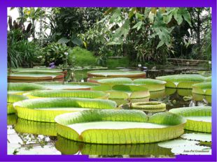 Эпифит— это какое-либо растение, которое произрастает на другом растении, п