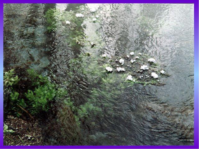 Уникален органический мир Байкала. В озере встречается около1500 видов живот...