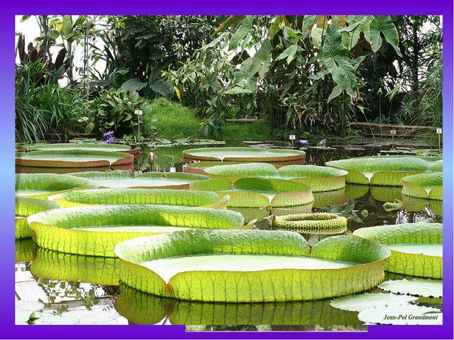 Эпифит— это какое-либо растение, которое произрастает на другом растении, п...
