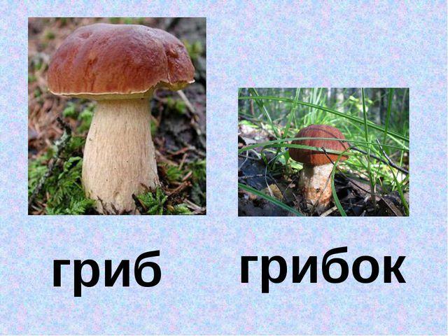 гриб грибок