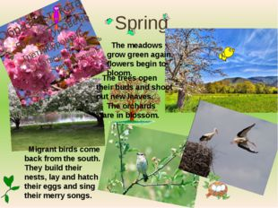 Spring The trees open their buds and shoot out new leaves. The meadows grow g