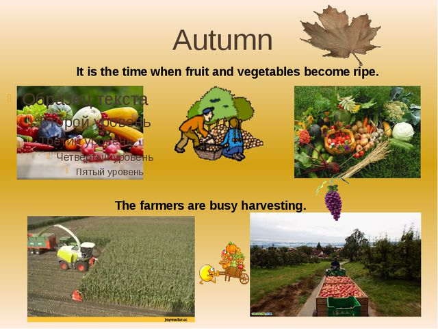 Autumn The farmers are busy harvesting. It is the time when fruit and vegetab...