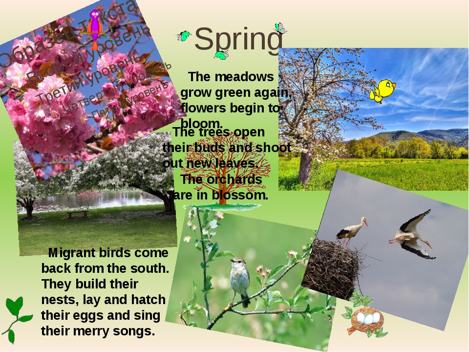 Spring The trees open their buds and shoot out new leaves. The meadows grow g...