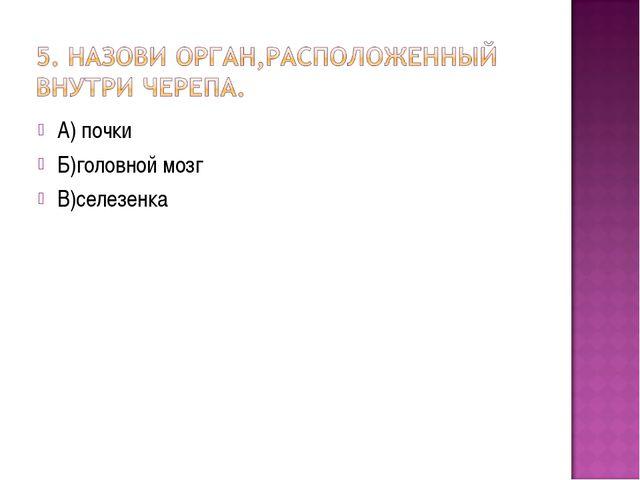 А) почки Б)головной мозг В)селезенка