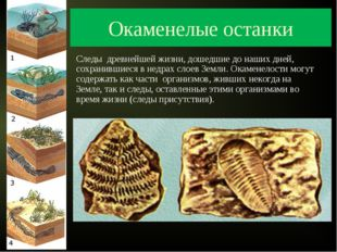 Окаменелые останки Следы древнейшей жизни, дошедшие до наших дней, сохранивши